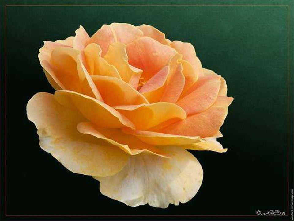 Je te souhaite des choses pures, du bonheur .Point n est besoin d honneurs et de richesses.