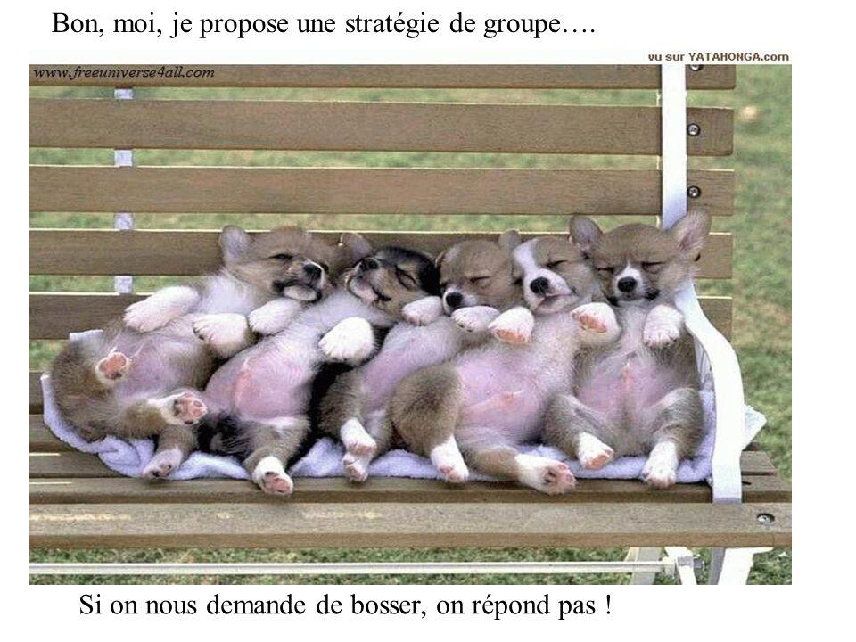 Bon, moi, je propose une stratégie de groupe…. Si on nous demande de bosser, on répond pas !