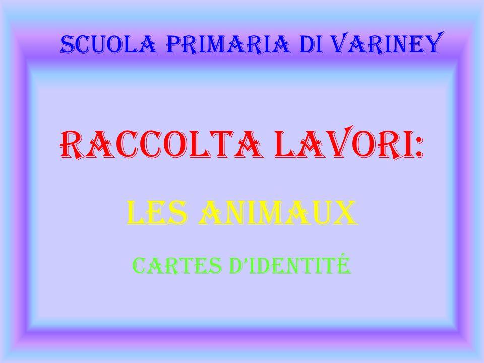 Raccolta Lavori: Les Animaux Cartes didentité Scuola Primaria di Variney