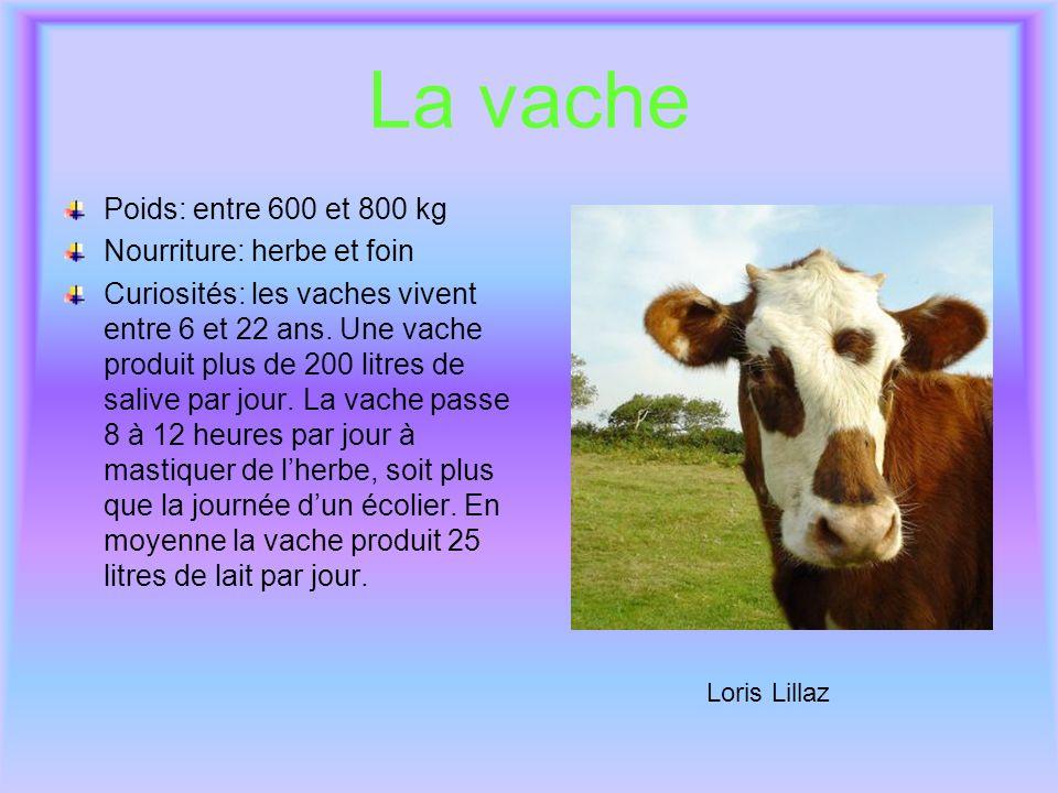 La vache Poids: entre 600 et 800 kg Nourriture: herbe et foin Curiosités: les vaches vivent entre 6 et 22 ans. Une vache produit plus de 200 litres de
