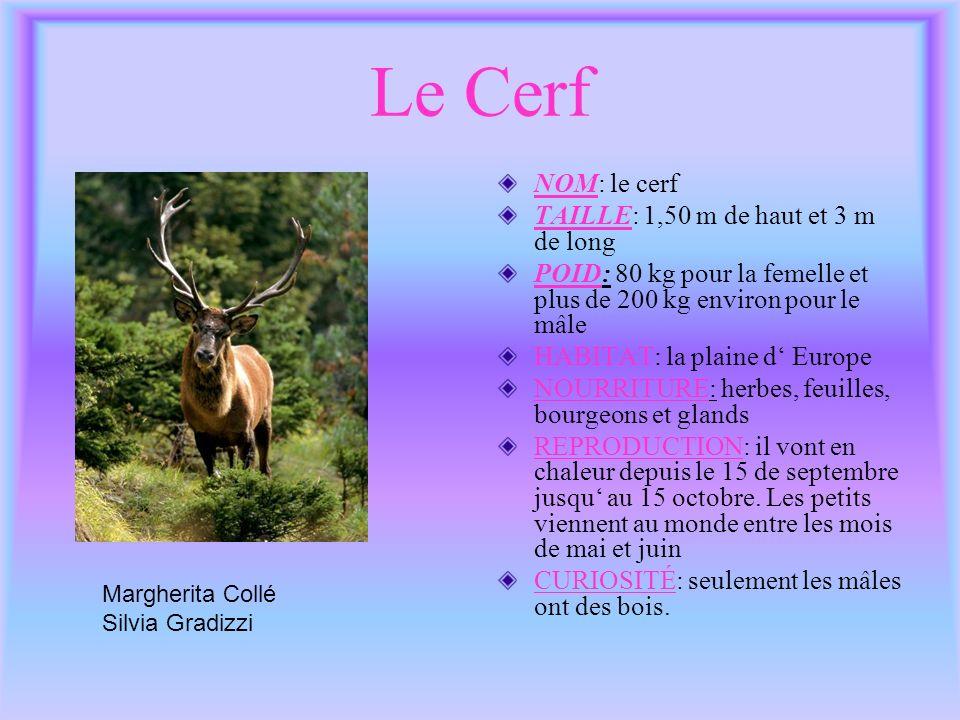 Le Cerf NOM: le cerf TAILLE: 1,50 m de haut et 3 m de long POID: 80 kg pour la femelle et plus de 200 kg environ pour le mâle HABITAT: la plaine d Eur
