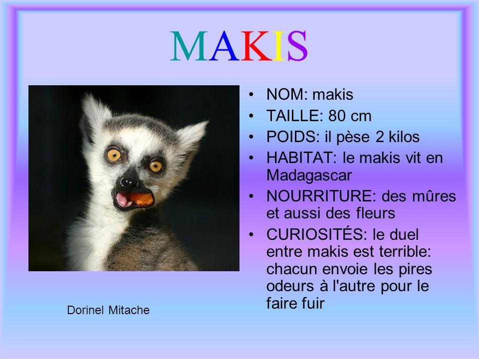 MAKISMAKIS NOM: makis TAILLE: 80 cm POIDS: il pèse 2 kilos HABITAT: le makis vit en Madagascar NOURRITURE: des mûres et aussi des fleurs CURIOSITÉS: l
