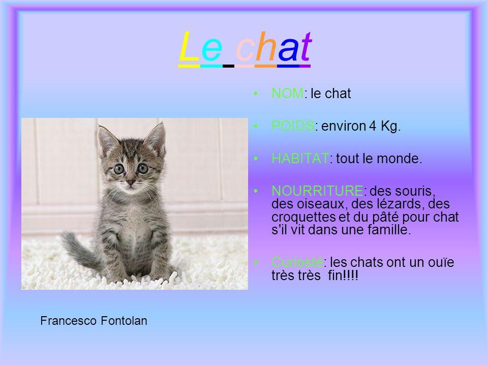 Le chatLe chat NOM: le chat POIDS: environ 4 Kg. HABITAT: tout le monde. NOURRITURE: des souris, des oiseaux, des lézards, des croquettes et du pâté p