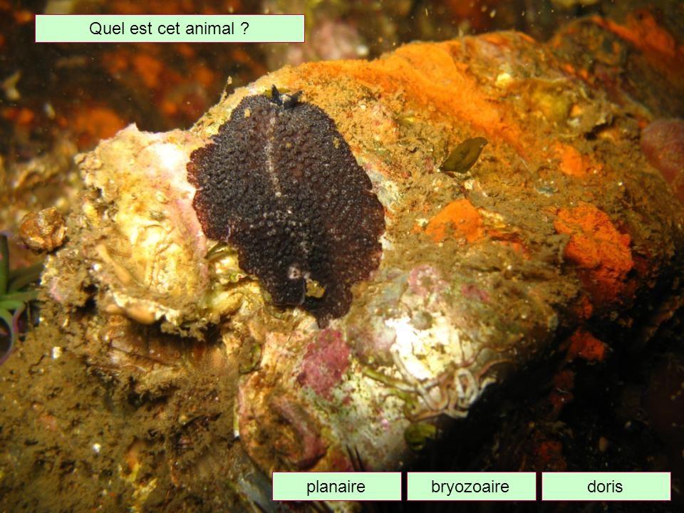 Comment appelle-t-on lélevage des huîtres ? OstréicultureAvicultureHéliciculture
