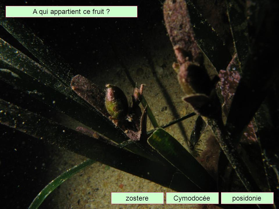 Quel est cet animal ? dorisplanairebryozoaire