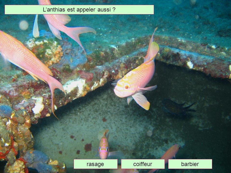 Que peut on dire de ce poisson ? Il est parasité il est colorée Il est beau