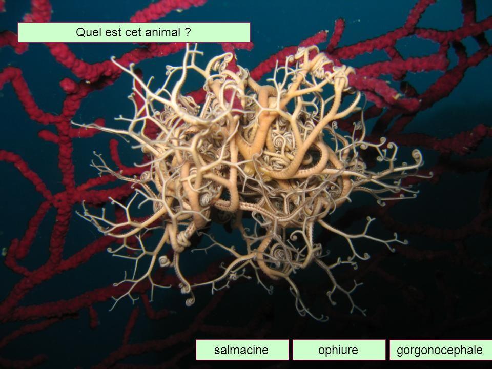 Comment sappelle le fruit de la posidonie ? Pomme de mer Olive de mer Groseille de mer