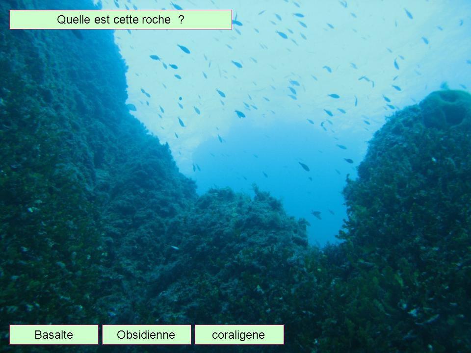 Quelle branche de la zoologie étudie les poissons ? Ophiologie Ichtyologie Entomologie