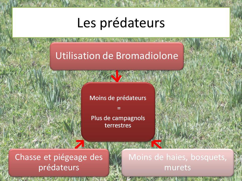 Les prédateurs Moins de prédateurs = Plus de campagnols terrestres Moins de prédateurs = Plus de campagnols terrestres Utilisation de Bromadiolone Moi