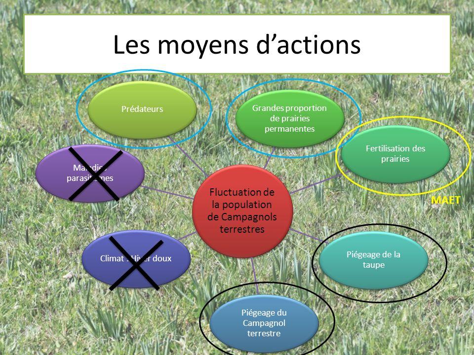 Les moyens dactions Fluctuation de la population de Campagnols terrestres Prédateurs Grandes proportion de prairies permanentes Fertilisation des prai