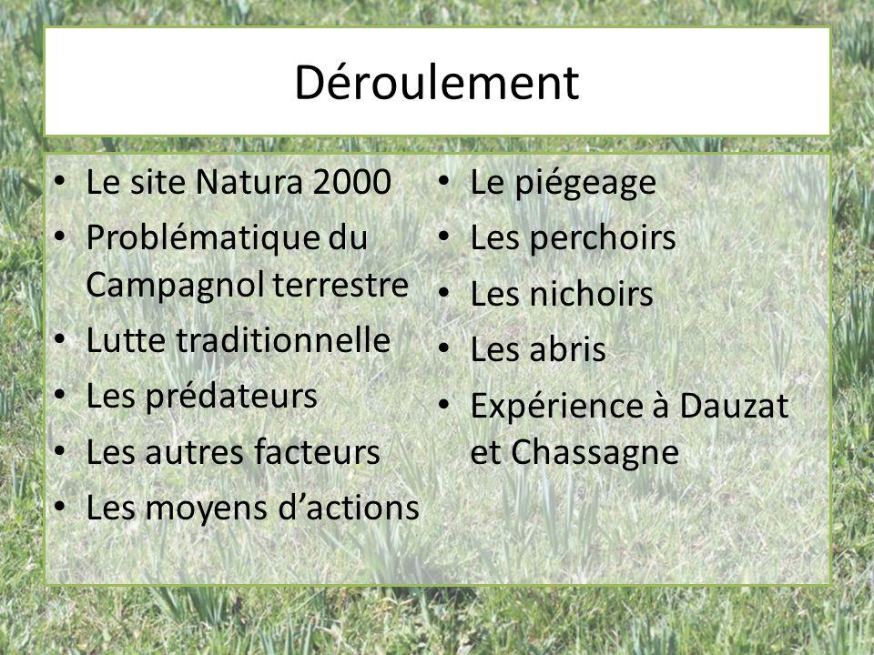 Déroulement Le site Natura 2000 Problématique du Campagnol terrestre Lutte traditionnelle Les prédateurs Les autres facteurs Les moyens dactions Le pi