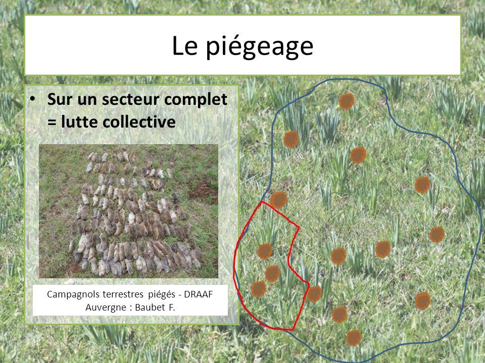 Le piégeage Sur un secteur complet = lutte collective Campagnols terrestres piégés - DRAAF Auvergne : Baubet F.
