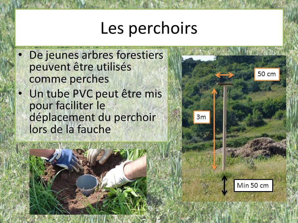 Les perchoirs 3m 50 cm Min 50 cm De jeunes arbres forestiers peuvent être utilisés comme perches Un tube PVC peut être mis pour faciliter le déplaceme