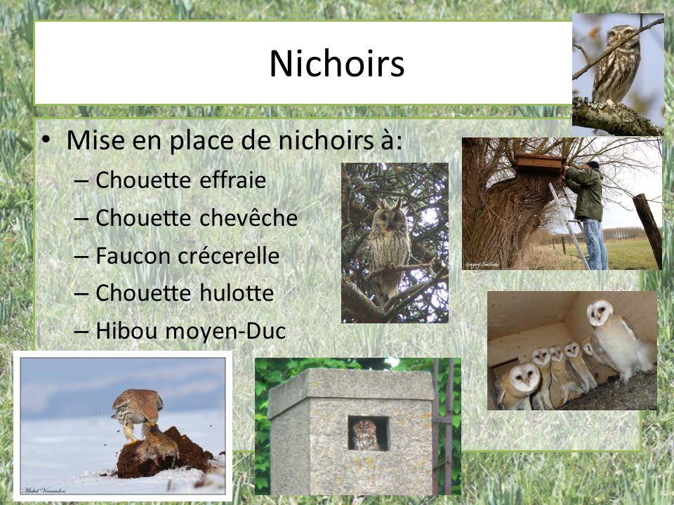 Nichoirs Mise en place de nichoirs à: – Chouette effraie – Chouette chevêche – Faucon crécerelle – Chouette hulotte – Hibou moyen-Duc