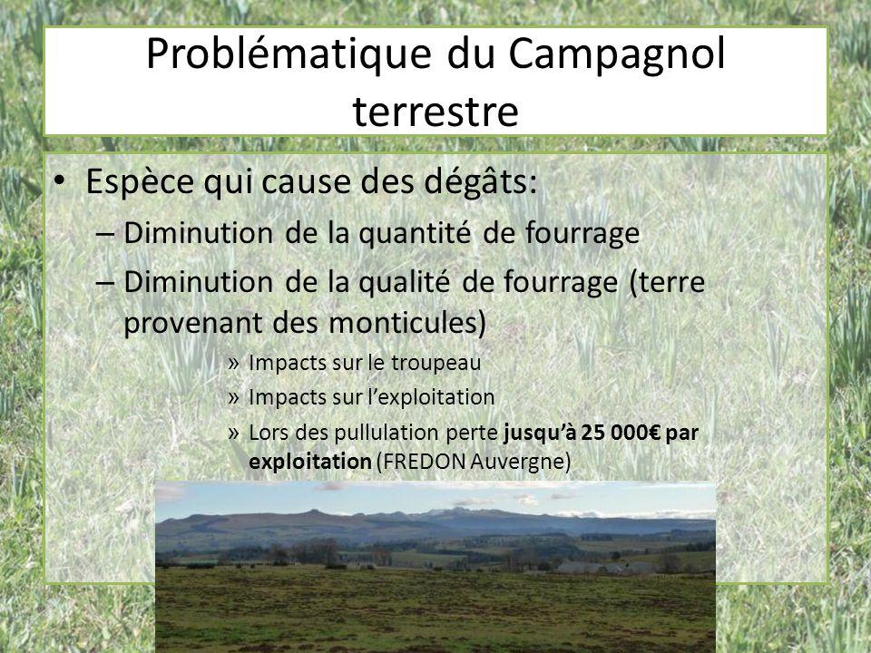 Problématique du Campagnol terrestre Espèce qui cause des dégâts: – Diminution de la quantité de fourrage – Diminution de la qualité de fourrage (terr