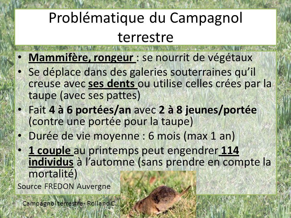 Problématique du Campagnol terrestre Mammifère, rongeur : se nourrit de végétaux Se déplace dans des galeries souterraines quil creuse avec ses dents