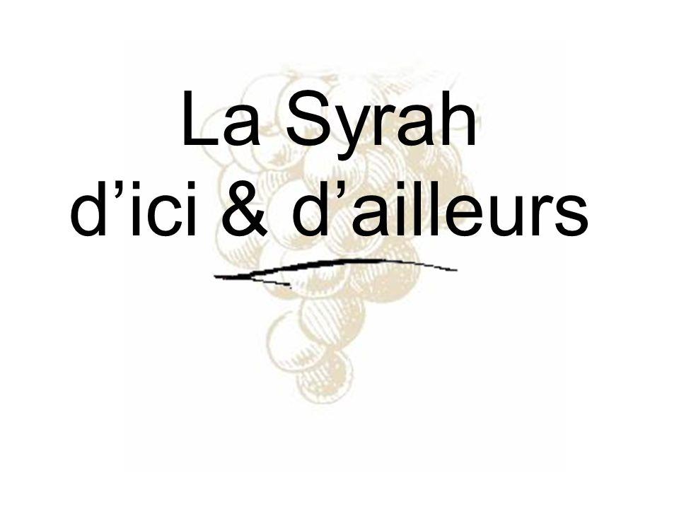La syrah est un cépage noir français caractéristique de la partie septentrionale des Côtes du Rhône.