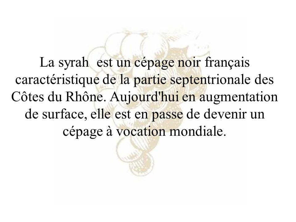 La syrah est un cépage noir français caractéristique de la partie septentrionale des Côtes du Rhône. Aujourd'hui en augmentation de surface, elle est