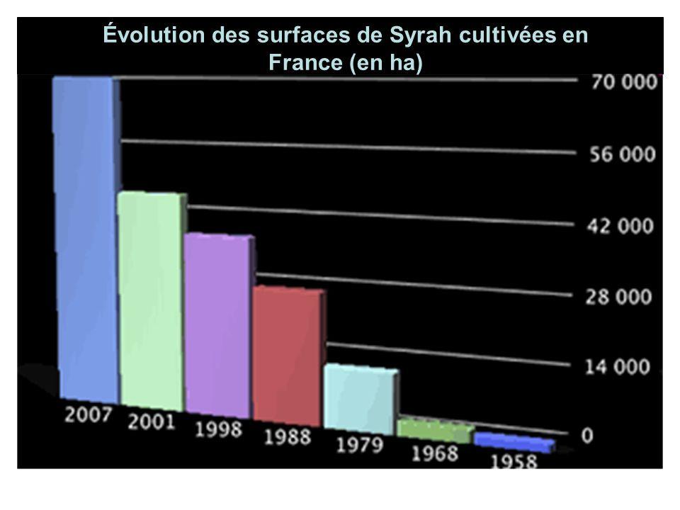 Surface Plantée en Hectares Évolution des surfaces de Syrah cultivées en France (en ha)