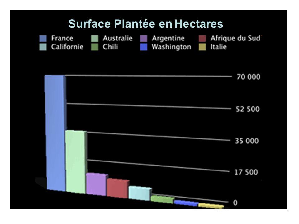 Surface Plantée en Hectares
