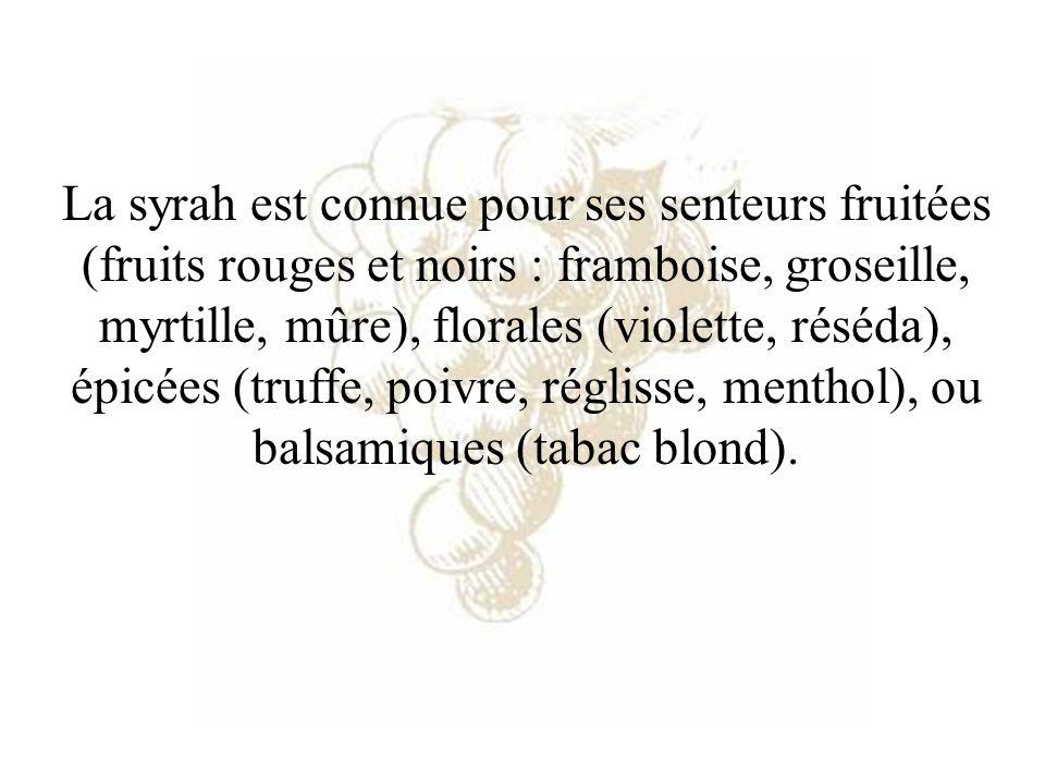 La syrah est connue pour ses senteurs fruitées (fruits rouges et noirs : framboise, groseille, myrtille, mûre), florales (violette, réséda), épicées (