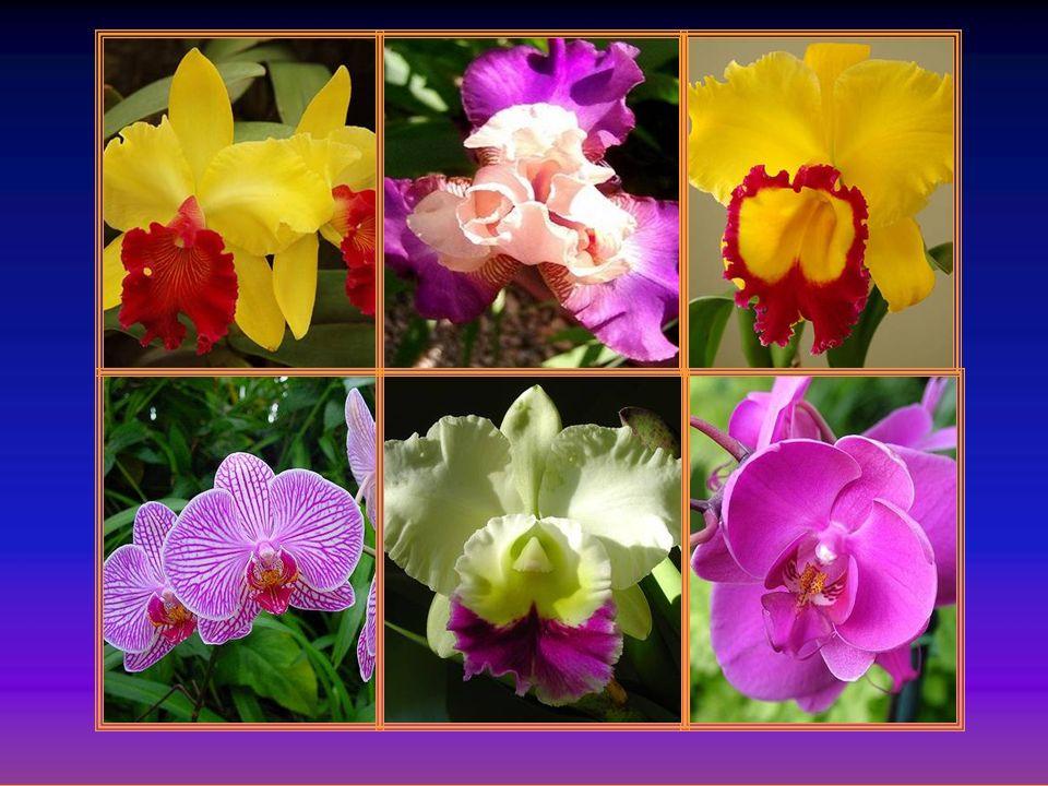 Il a rempli la terre de toutes ces orchidées, qui ont tant besoin damour dans leur fragilité, pour faire notre bonheur et combler notre cœur Il a créé
