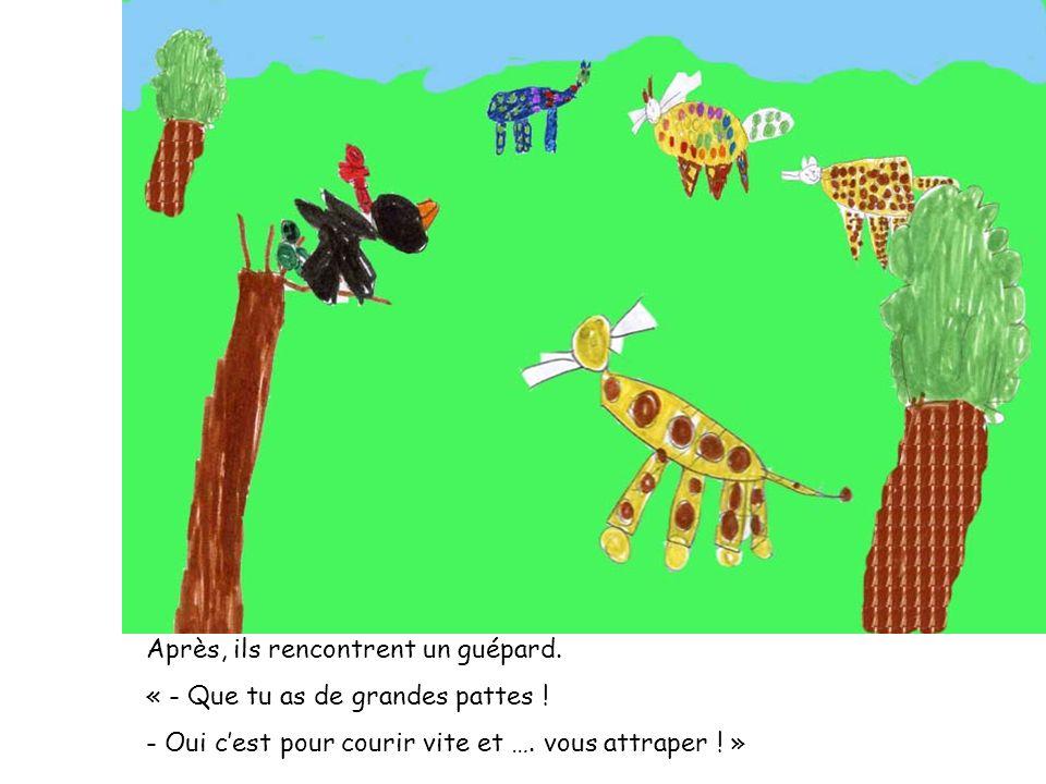 Après, ils rencontrent un guépard. « - Que tu as de grandes pattes ! - Oui cest pour courir vite et …. vous attraper ! »
