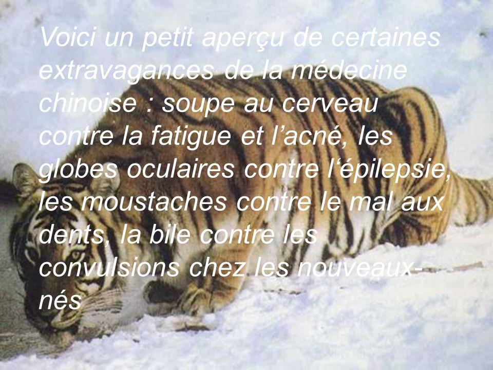 quasi-intensif. Le tigre est en effet victime de sa réputation : il a une grande valeur marchande en Asie. Sa sublime fourrure peut être revendue au m