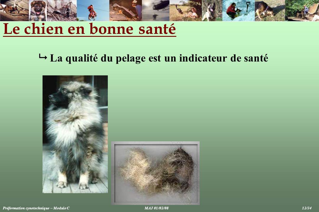 Le chien en bonne santé La qualité du pelage est un indicateur de santé Préformation cynotechnique – Module CMAJ 01/02/08 12/34