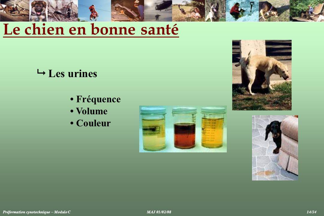 Le chien en bonne santé Les urines Fréquence Volume Couleur Préformation cynotechnique – Module CMAJ 01/02/08 14/34