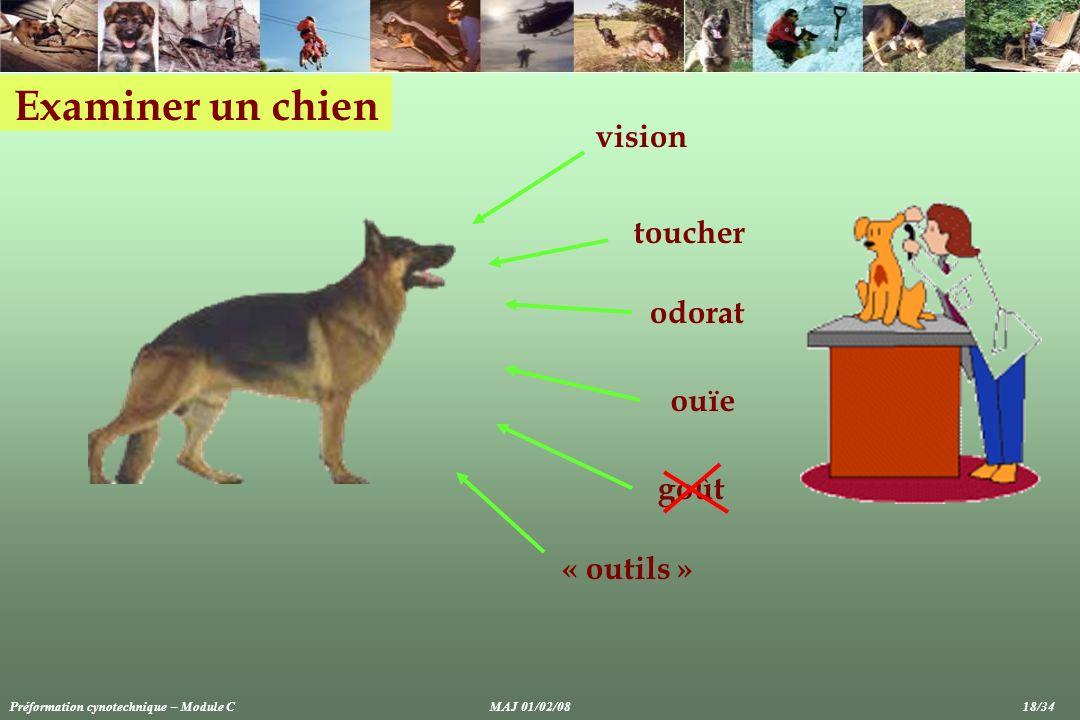 Examiner un chien goût toucher odorat ouïe vision « outils » Préformation cynotechnique – Module CMAJ 01/02/08 18/34