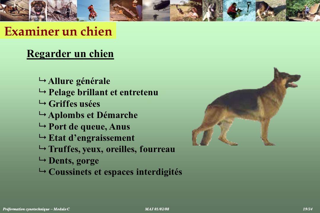 Examiner un chien Regarder un chien Allure générale Pelage brillant et entretenu Griffes usées Aplombs et Démarche Port de queue, Anus Etat dengraisse