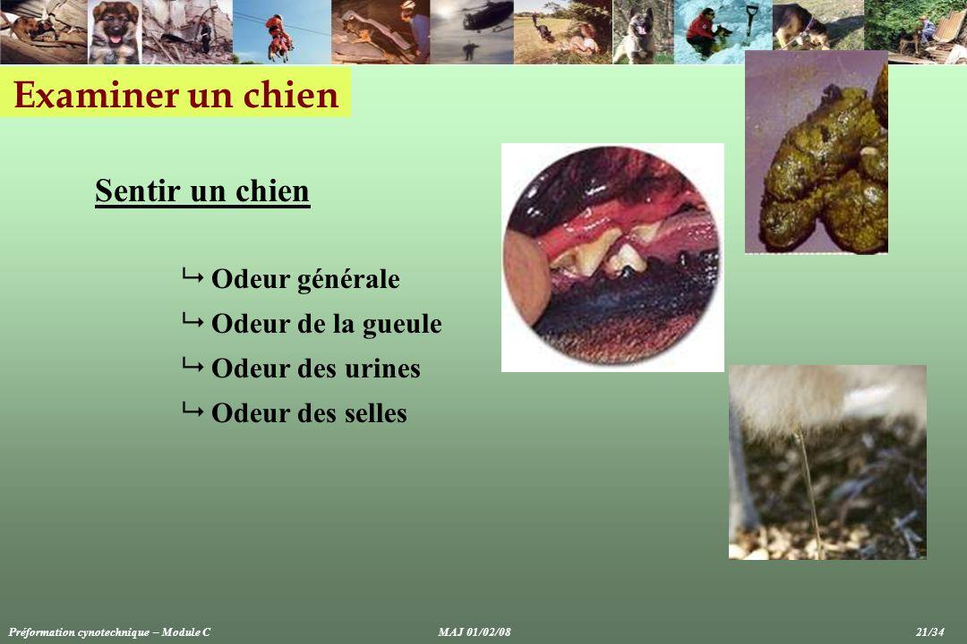 Examiner un chien Sentir un chien Odeur générale Odeur de la gueule Odeur des urines Odeur des selles Préformation cynotechnique – Module CMAJ 01/02/0