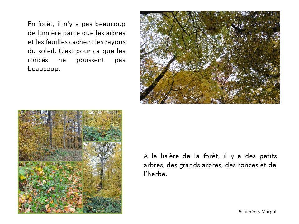 En forêt, il ny a pas beaucoup de lumière parce que les arbres et les feuilles cachent les rayons du soleil. Cest pour ça que les ronces ne poussent p