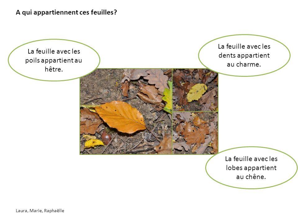 Comment reconnaître le chêne.Le chêne est un arbre qui a des écorces avec des griffes.