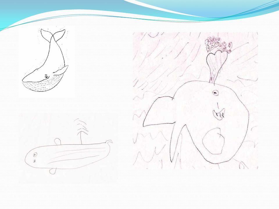 La baleine à bosse Cest le plus gros mammifère marin et le plus gros animal du monde.