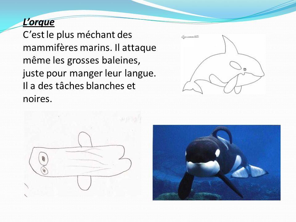 Le dauphin Cest le plus sportif.Il fait des sauts comme des ponts à lendroit.