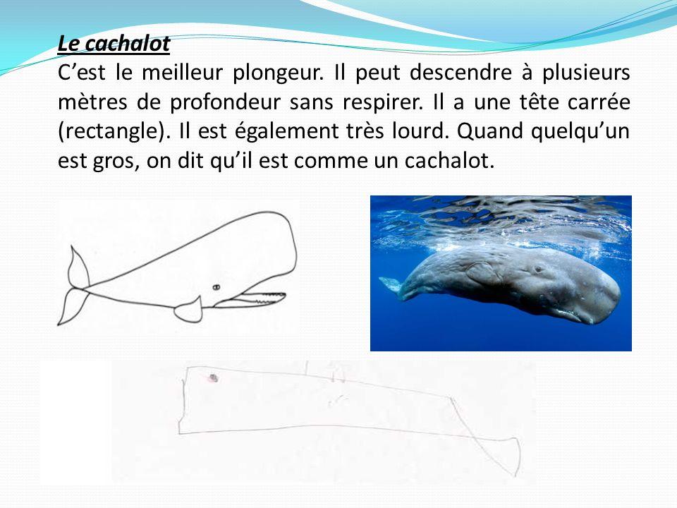Lorque Cest le plus méchant des mammifères marins.