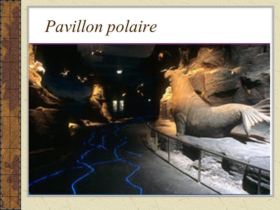 Pavillon polaire