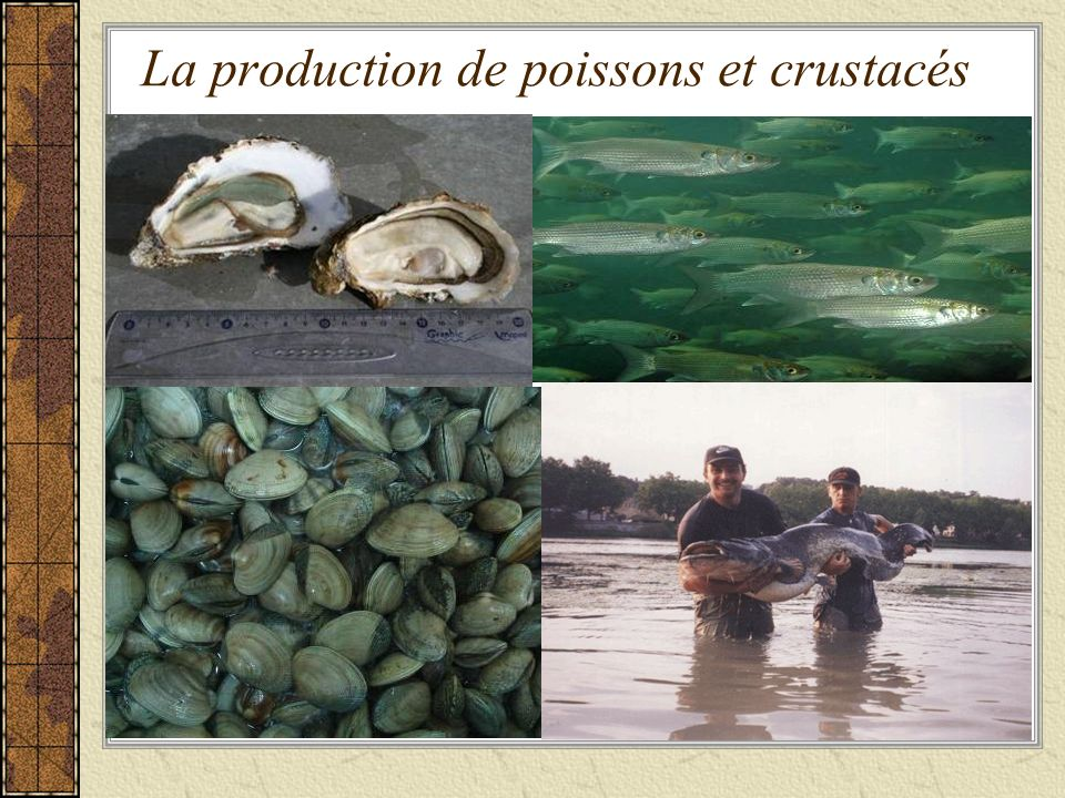 La production de poissons et crustacés