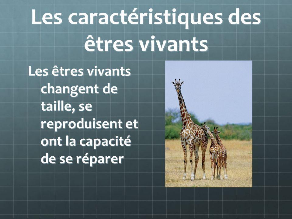 Les caractéristiques des êtres vivants Les êtres vivants changent de taille, se reproduisent et ont la capacité de se réparer