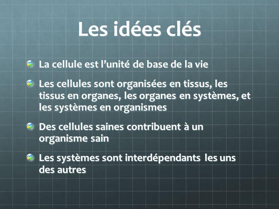 Les idées clés La cellule est lunité de base de la vie Les cellules sont organisées en tissus, les tissus en organes, les organes en systèmes, et les systèmes en organismes Des cellules saines contribuent à un organisme sain Les systèmes sont interdépendants les uns des autres