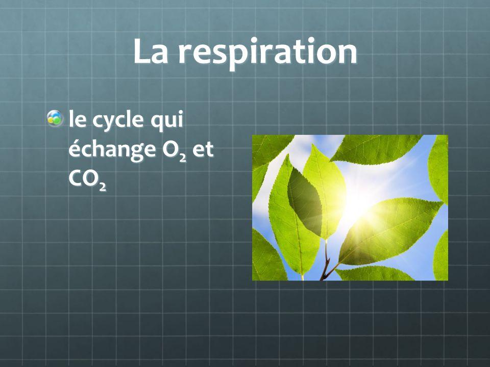La respiration le cycle qui échange O 2 et CO 2