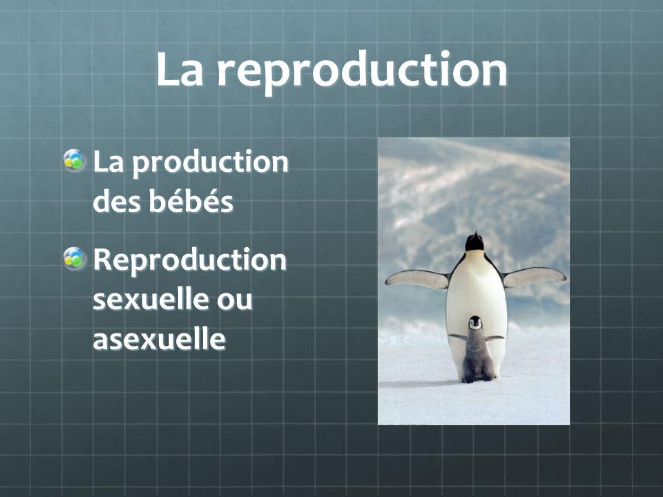 La reproduction La production des bébés Reproduction sexuelle ou asexuelle