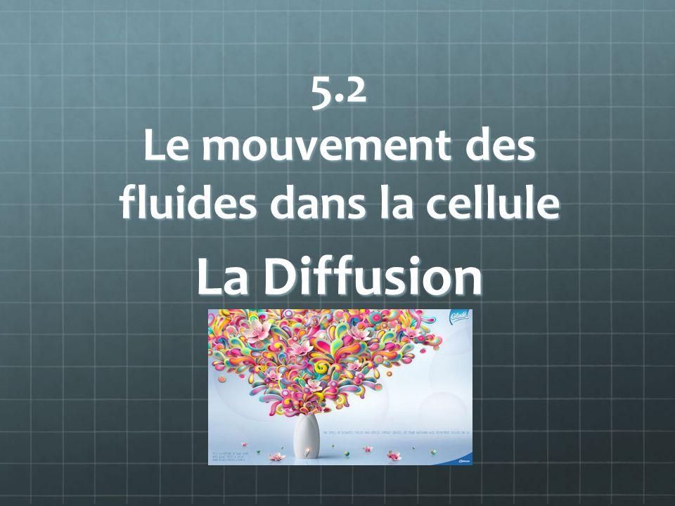 5.2 Le mouvement des fluides dans la cellule La Diffusion