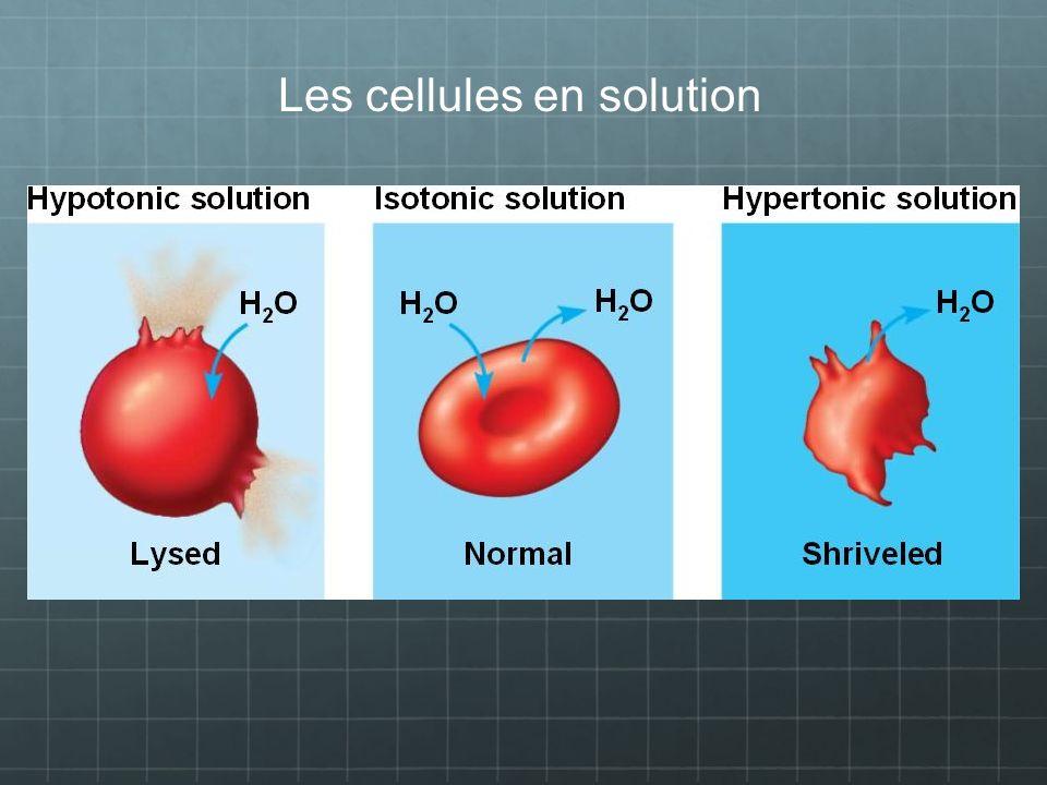 Les cellules en solution