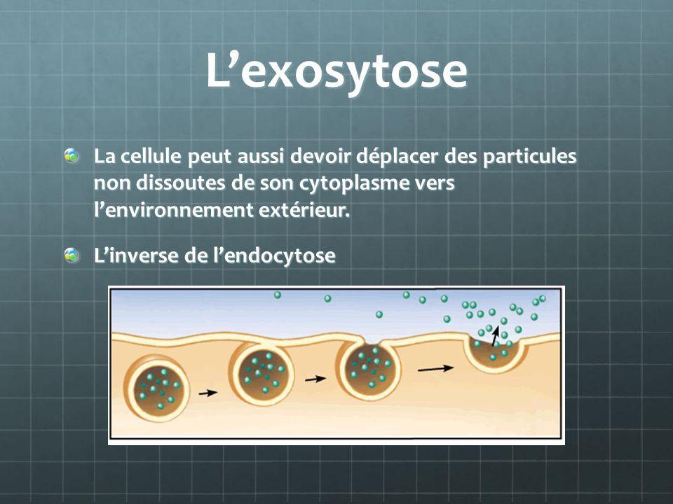 Lexosytose La cellule peut aussi devoir déplacer des particules non dissoutes de son cytoplasme vers lenvironnement extérieur.