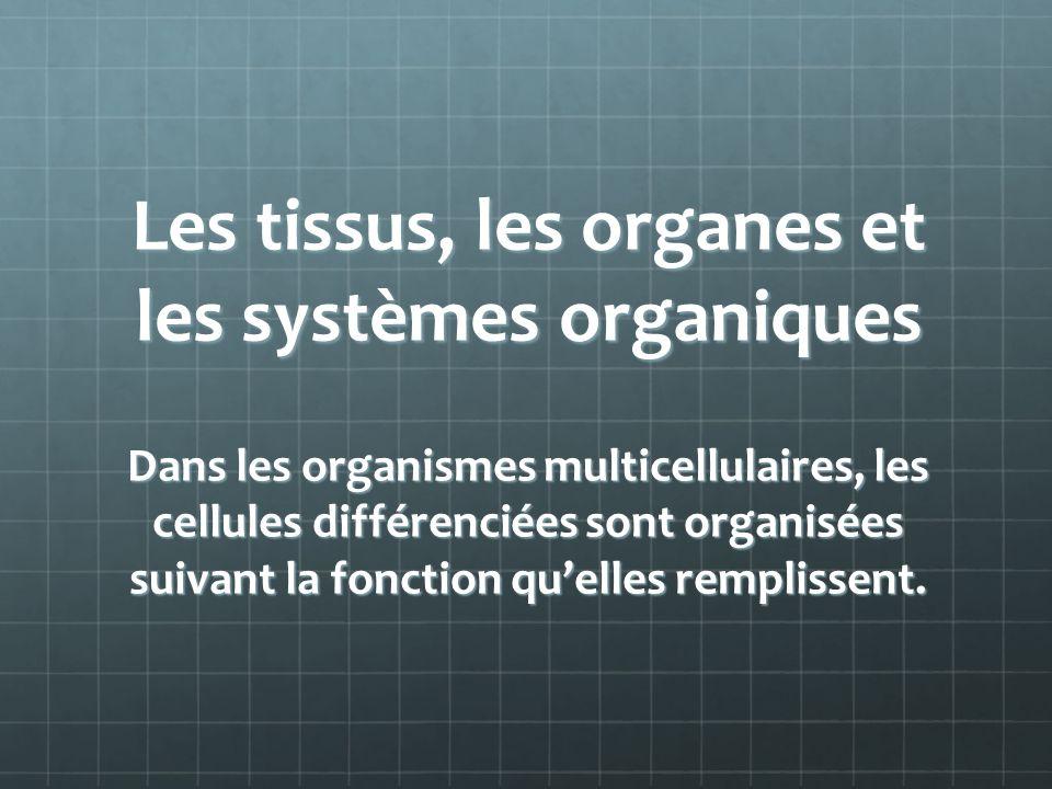 Les tissus, les organes et les systèmes organiques Dans les organismes multicellulaires, les cellules différenciées sont organisées suivant la fonction quelles remplissent.