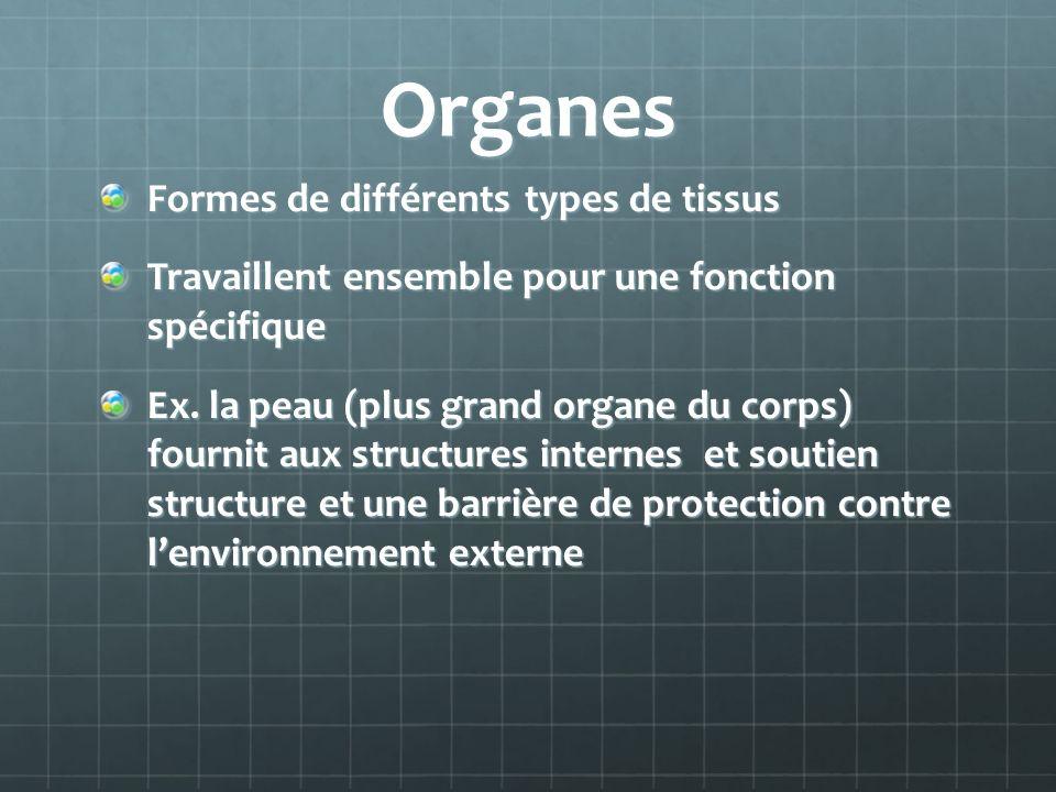 Organes Formes de différents types de tissus Travaillent ensemble pour une fonction spécifique Ex.