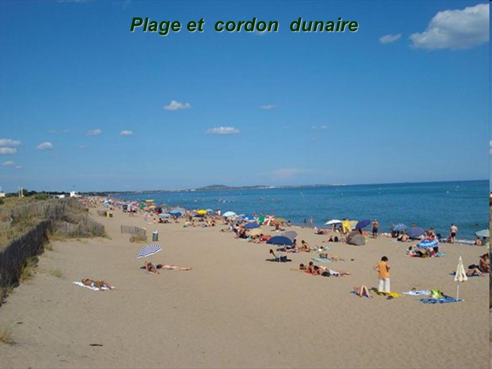 Plage et cordon dunaire